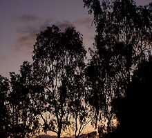 eucalypt silhouette by Jan Stead JEMproductions
