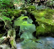 Green Stream by David Lampkins