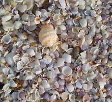 Shell Bed by Joneswithjoy
