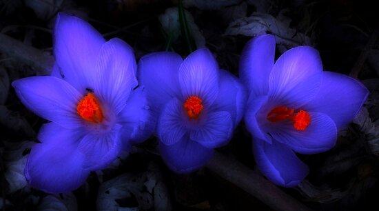 Purple Haze by Shelley Neff