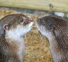 Kiss me quick!! by Sharon Perrett