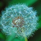 DANDELION SEEDS by DRON