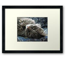 Jimmy lounging Framed Print