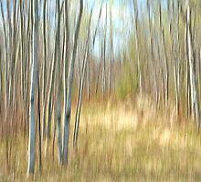 A Forest Clearing  by Bill Morgenstern