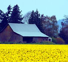 Fields Of Gold. by Todd Rollins