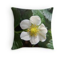 Strawberry season is here!  Spring brings yummy fruit.  La Mirada, CA USA Throw Pillow