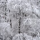 < A mantle of white.... > by John Schneider
