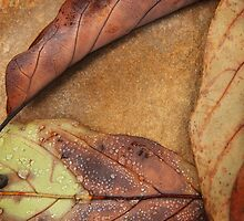 Fallen Triangle, Fine Art Photography, Abstract  by SammyPhoto