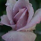 BLESSED WITH RAIN by Dana Yoachum