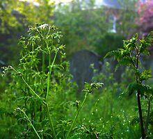 Graveyard Nettles at Dawn by Ruski