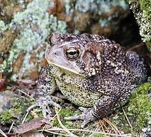 Lonely Mr Toad by KellyGirl