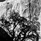 Rock Wall and Tree by dgcheney