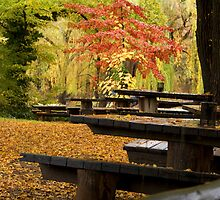 Autumn Canopy by Jared Revell