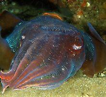 Giant Cuttlefish by MattTworkowski