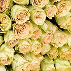 Roses by Gail Davison
