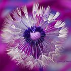 Groovy Dandelion  by ChereeCheree