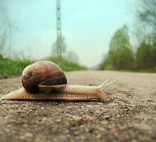 Snail on the road by ONiONAstudio