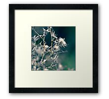Cotton Forest Framed Print