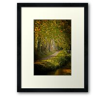 Path in the light Framed Print