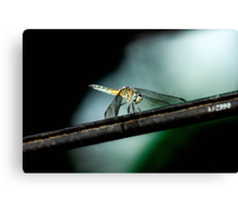Dragonfly on a Wire Canvas Print