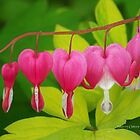 Bleeding Hearts by ChereeCheree