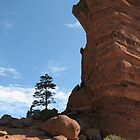 Red Rock by Terri Waughtel