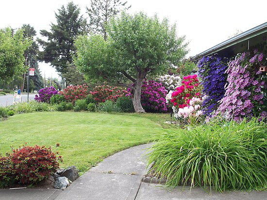 My Front Yard by lareejc