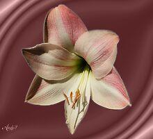 Amaryllis w/frame by Andy2302