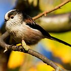 Long-tailed tit by Scorpion9