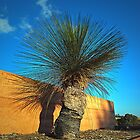 Mt Annan Grass Tree by George Petrovsky