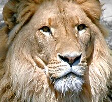 Portrait of a King by Steven  Agius
