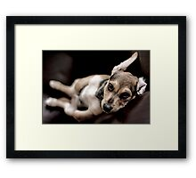 relaxed pup Framed Print