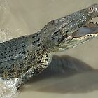 Jumping crocodile by Ian McKenzie