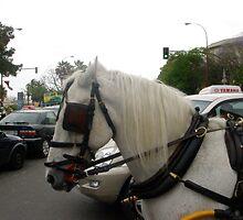 Horse Power by ScarlettRose