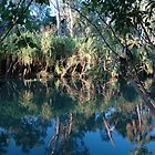 Wetlands near Darwin by Ian McKenzie