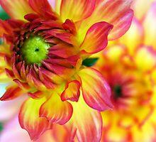 Soon to Bloom... by LindaR