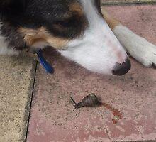 Max Meets Snail by pat oubridge