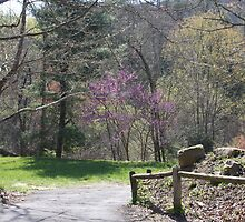 State Park Entrance by Joan1970