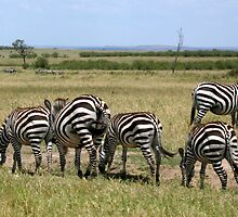 Stripes Are in This Year by jacqi