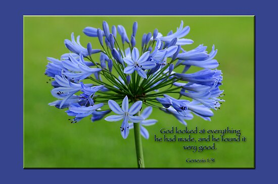 God looked at everything he had made, and he found it very good.  by Bonnie T.  Barry