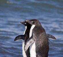 Adelie Penguins by Simon Coates