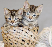 2 Tabby Kittens in Yarn Basket Sticker