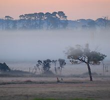 Dawn with Mist along the Freeway by iansimages