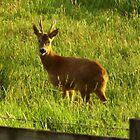 DEER by brucemlong