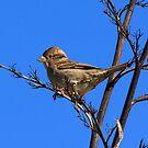 Sparrow by Faith Barker Photography