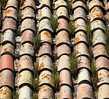 moss growing on old roof tiles by mrivserg