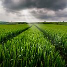 South Devon wheatfield by greenbunion