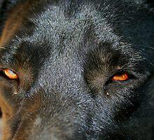 The eyes of a friend by Debbie Irwin
