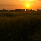 Sunset Over A Corn Field by woodgag