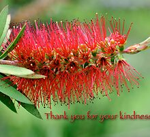 Thank you for your kindness by Bonnie T.  Barry